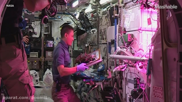 کاشت گل در ایستگاه بین المللی فضایی - زومیت