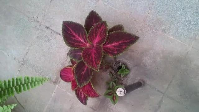 این گیاه از کجا در امده !؟!؟