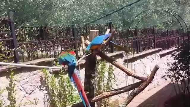 ماکائوها در بهشت طوطی سانان