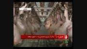 صادرات مرغ و تخم مرغ به 10 کشور منطقه