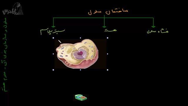 آموزش علوم هفتم-ساختمان سلول