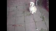 سگ باهوش و دوست داشتنی