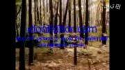 آهنگ خاطره انگیز سریال آیوانهوی جوان