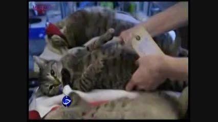 عمل جراحی زیبایی حیوانات