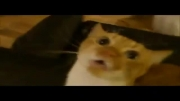 گربه خواننده (بمب خنده)