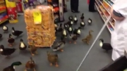 حمله اردکها به فروشگاه مواد غذایی !!