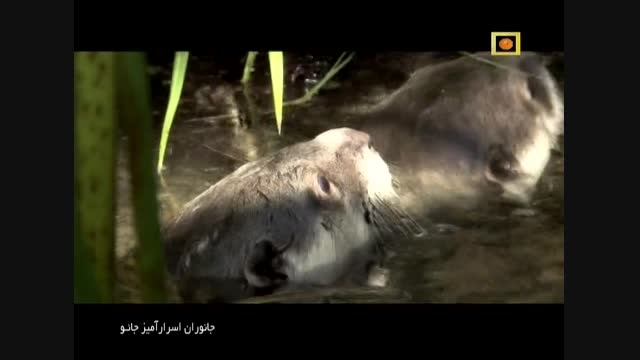 جانوران اسرار آمیز جائو با دوبله فارسی - راز های سلطنتی