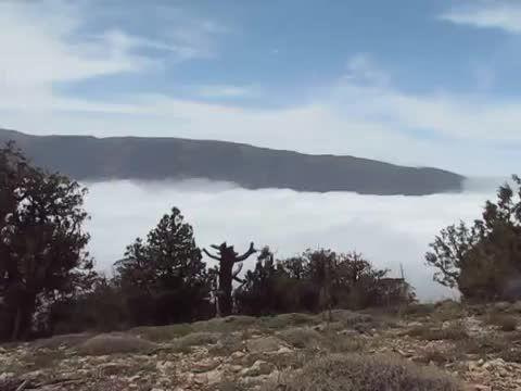 اقیانوس ابر در جنگل ابر