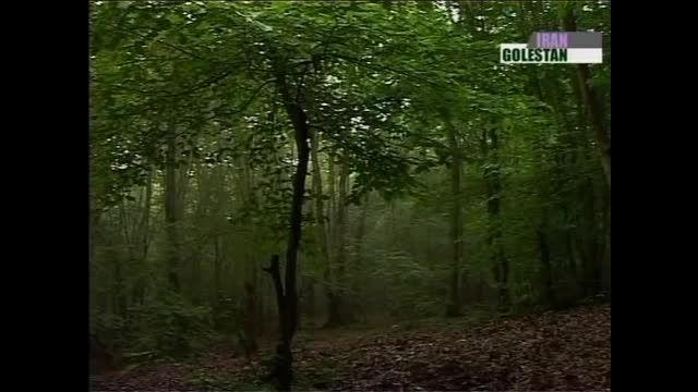 جنگل ناهارخوران و النگ دره در استان گلستان (پارت دوم)