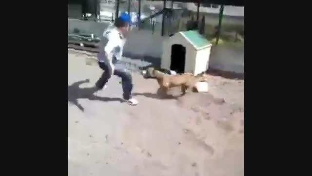 عاقبت دردناک سر به سر گذاشتن به یک سگ...