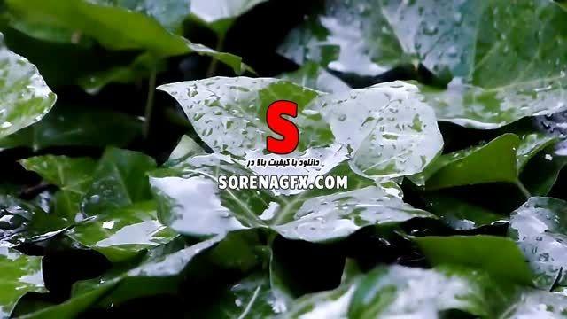 دانلود فوتیج برخورد باران بر برگ گیاهان