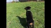 رمانتیک ترین سگ دنیا :) ( بازی سگ با اسباب بازی :( )