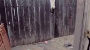 نبرد گربه و سگ دوبرمن