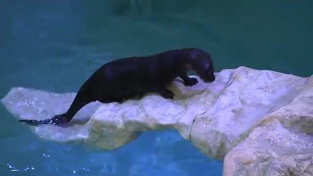 Walle the Otter's New Slide