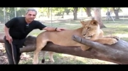 مهران مدیری در آفریقا در قفس شیر