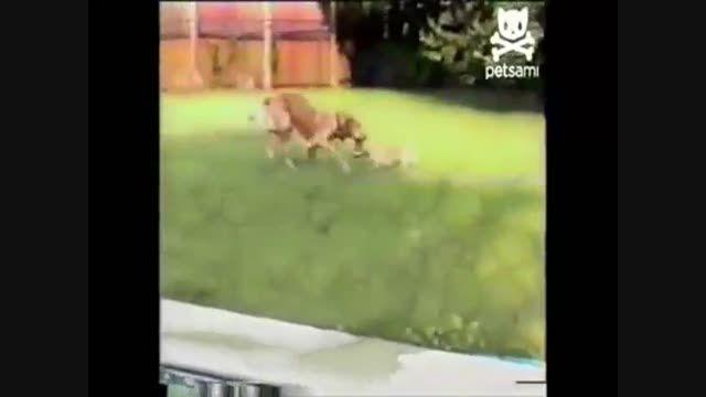 مهر مادری،سگ+فیلم کلیپ جانوران حیوانات گلچین صفاسا