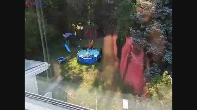 خانواده خرس ها در استخر خانه+فیلم کلیپ گلچین صفاسا