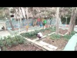 alireza japalaghy Ft. RAHAA Guys in The heydar nia Gym And Park (FreeRunning