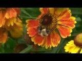 زنبور عسل در پرواز و تلاش