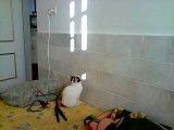 سرکار گذاشتن گربه !