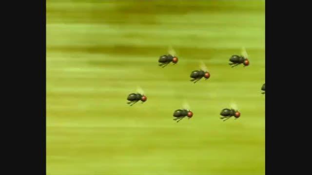 انیمیشن زندگی حشرات (Minuscule) قسمت 74