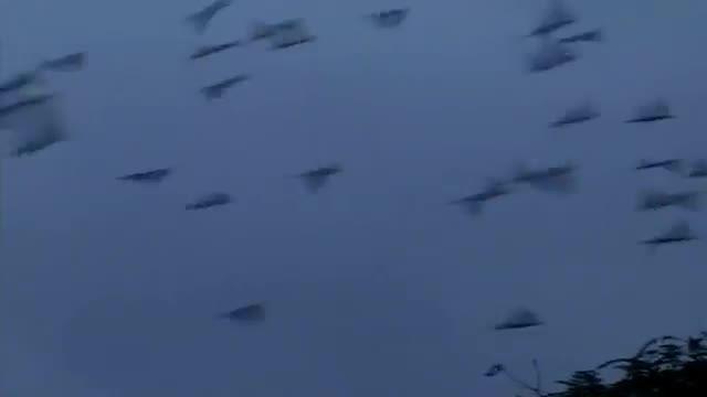 تغذیه هزاران طوطی ملنگو در هند