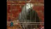 طوطی سخنگو  خفن