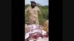 ذبح زرافه باغ وحش توسط یک داعشی..