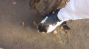 کفش پاک کن گربه ای