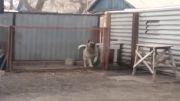 رقصیدن زیبای سگ با آهنگ(مدرن تاکینگ)..آخر رقصیدنه...
