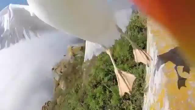 سرقت دوربین دیجیتال توریست توسط مرغ دریایی در ساحل