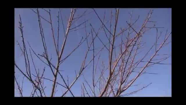 آموزش نحوه ی هرس کردن درختان در اول بهار