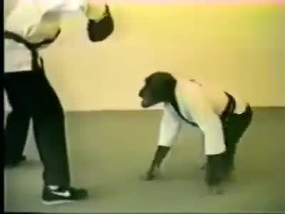 اخر خنده!!! میمون رزمی کار