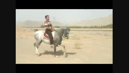 اسب کرد-اسب تعزیه-اسب پرخون-زلزله زرین شهر