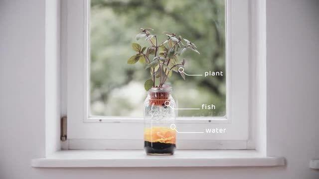 گلدان آبی، داستان عاشقانه ماهی و گیاه