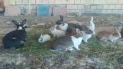 خرگوش های من رو میز نهار خخخخخخ