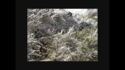 جنگل ابر پاییز 92
