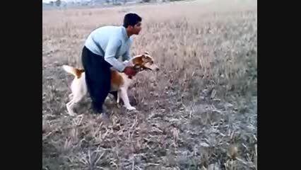 خرسی سگ نجم الدین