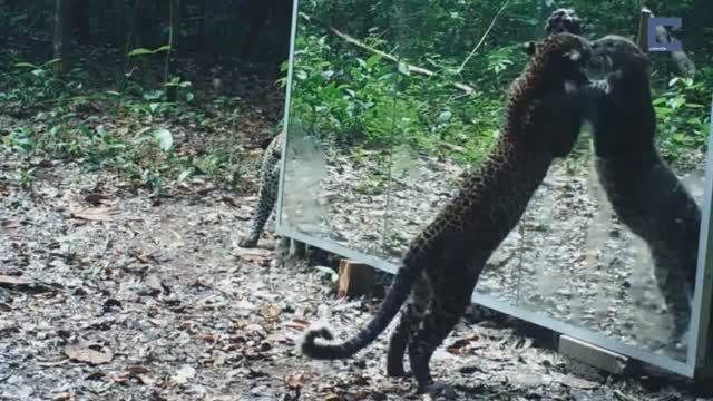 واکنش بی نظیر حیوانات در مقابل آینه