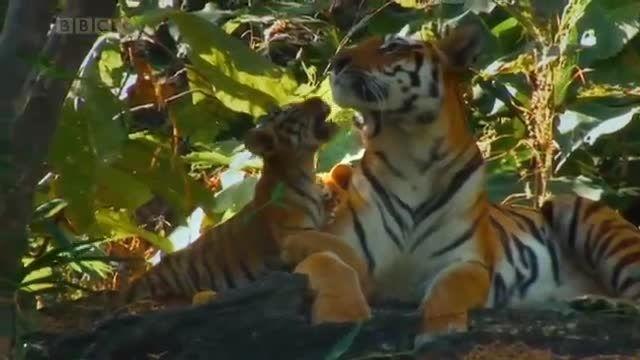 زیبایی شگفت انگیز طبیعت و حیوانات