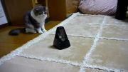 سر کار گذاشتن گربه+خنده دار