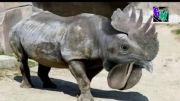 76 حیوانات نادر و عجیب در جهان !
