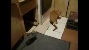 ترس فجیع گربه از موش!!!
