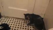 رابطه خنده دار گربه و آب