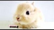 10 حیوان زیبای دنیا