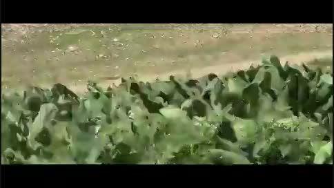 بوکس رنجر.مستند طبیعت دوای هردرد-قسمت اول