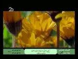 محسن یگانه - چوپون دروغگو