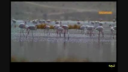 تصاویر بسیار زیبا از پرندگان و حیات وحش استان فارس