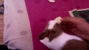 خوردن خرگوش!!!