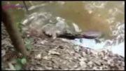 برق. مار ماهی و تمساح را خشک کرد..!!!!!!!(حتما نگاه کنید)